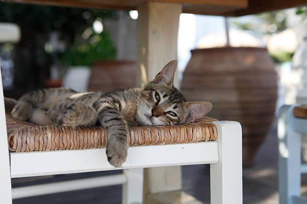 Beautiful small cat or kitten laying on a chair picture id463632825?b=1&k=6&m=463632825&s=612x612&w=0&h=zhhidln34oz7xlqoq4taa gju atqwaattcduby xx4=