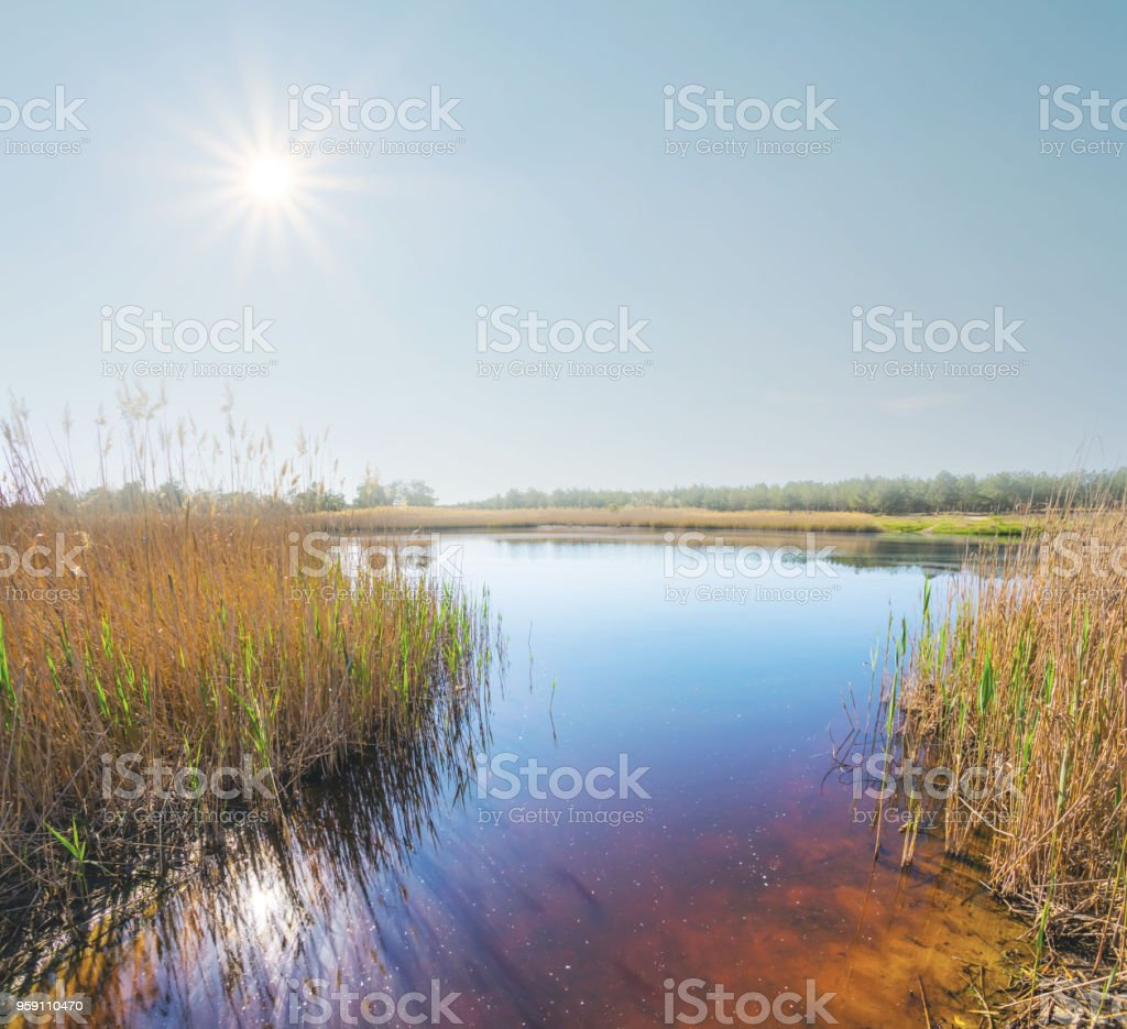 beautiful small lake under a hot sparkle sun stock photo