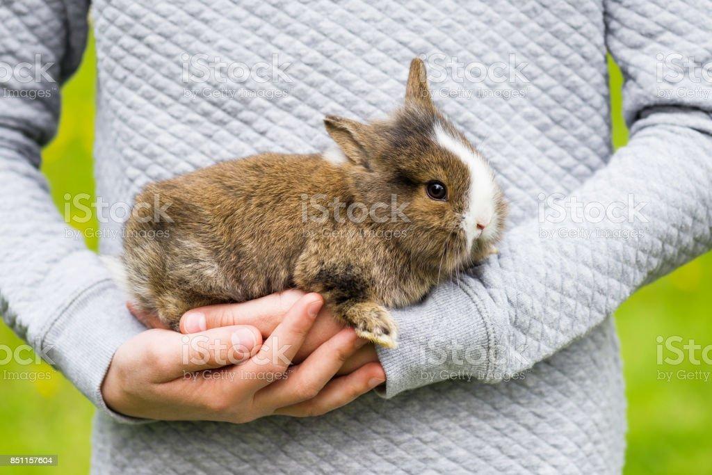 Güzel küçük tavşan tavşan kız ellerinde. stok fotoğrafı