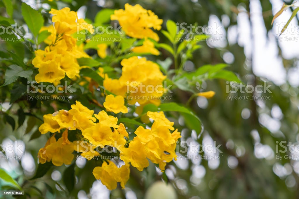 Beautiful small yellow flower. royalty-free stock photo