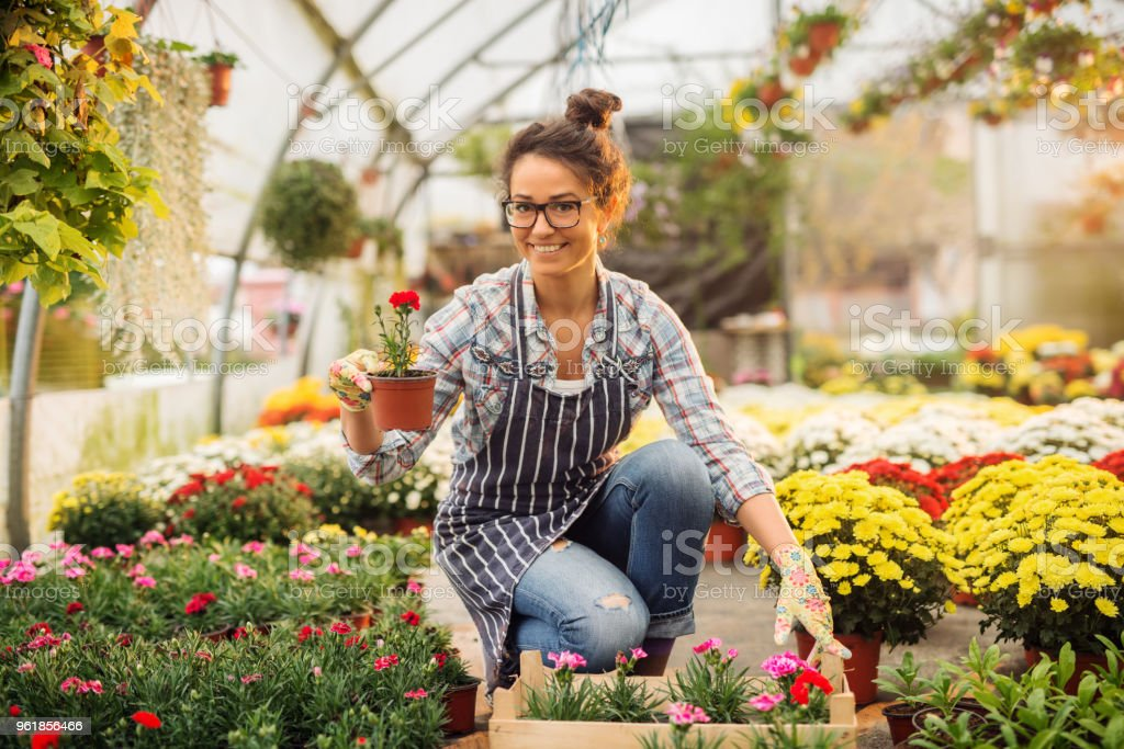 Beautiful smiling florist woman posing while crouching and holding flowerpot with a red flower in the colourful bright greenhouse. stock photo
