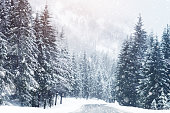 Beautiful snow-covered fir-trees in the Alpine mountains. Winter landscape.