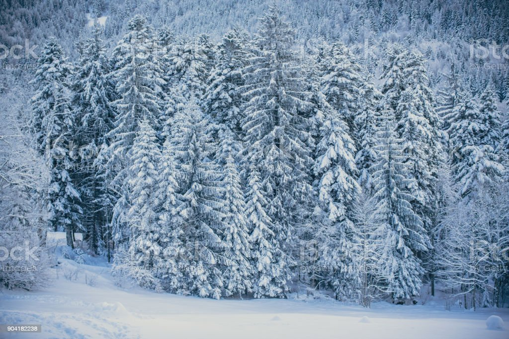 Beautiful Snowy Forest Winter Wallpaper Stock Photo