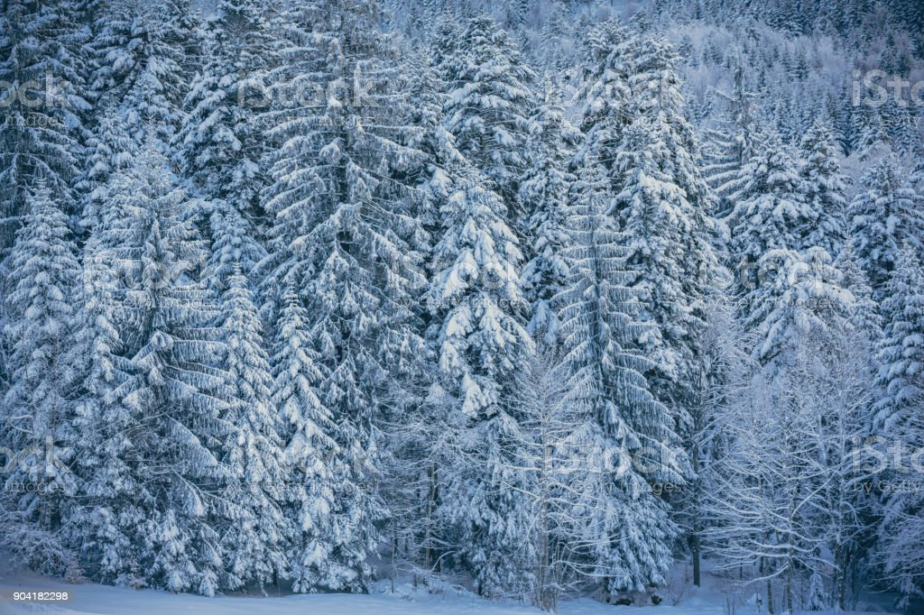 Beautiful Snowy Forest Winter Wallpaper Stock Photo More Pictures