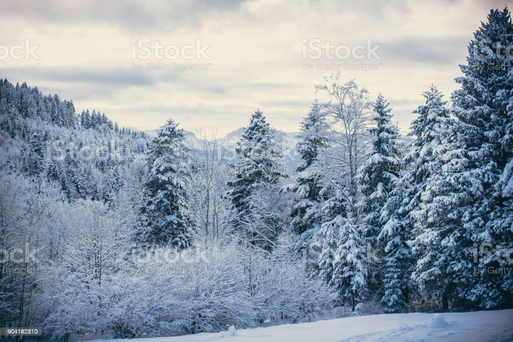 Beautiful Snowy Forest Winter Wallpaper Royalty Free Stock Photo