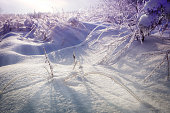 Beautiful snowy winter landscape. Icy tree branches and bushes. Gloomy sun. Shadows on snow.