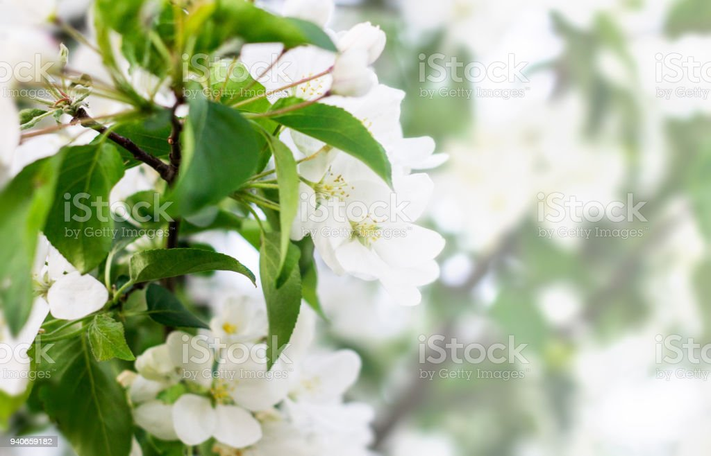 Beautiful soft focus photo of spring flowers on magically lighted background. stock photo