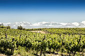 South American vineyards of Malbec, Tupungato, Mendoza, Argentina.