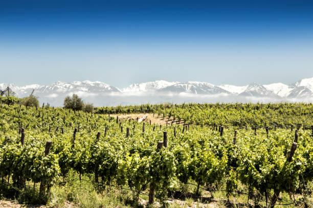 Beautiful South American vineyard in Tupungato, Mendoza, Argentina. stock photo