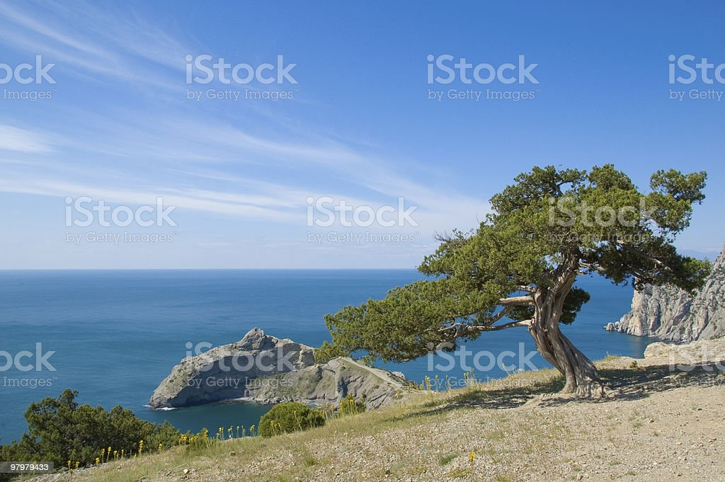 beautiful south view with sea, mountain and pine royalty-free stock photo