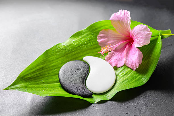 beautiful spa concept of pink hibiscus flower and Yin-Yang stock photo