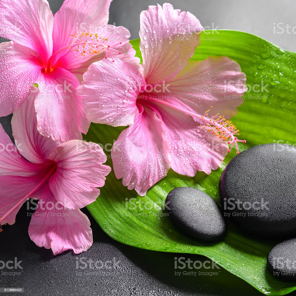 Beautiful spa concept of pink hibiscus flowers stock photo more beautiful spa concept of pink hibiscus flowers royalty free stock photo izmirmasajfo