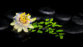 beautiful spa setting of passiflora flower and green branch fern on zen stones with drops in reflection water, closeup