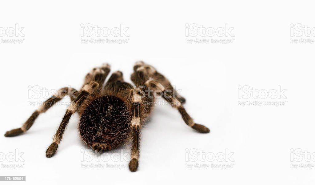 beautiful spider stock photo