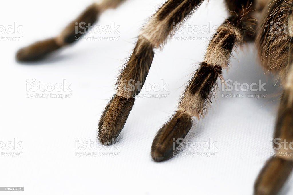 beautiful spider (detail) stock photo