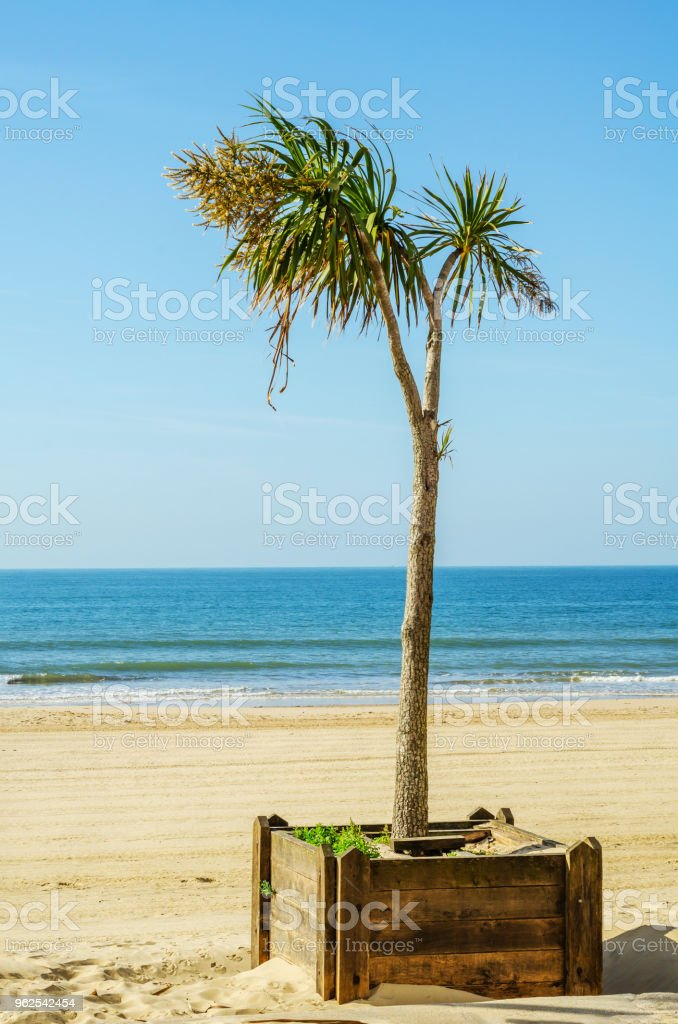 beautiful spreading palm tree, exotic plants symbol of holidays, hot day, big leaves - Royalty-free Abstract Stock Photo