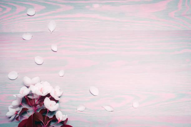 mooie lente appel bloemen op houten achtergrond. - meerdere lagen effect stockfoto's en -beelden