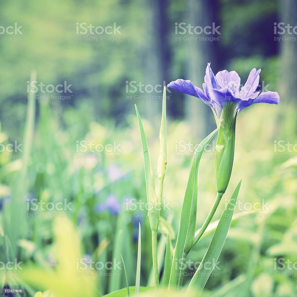 Beautiful spring background royalty-free stock photo