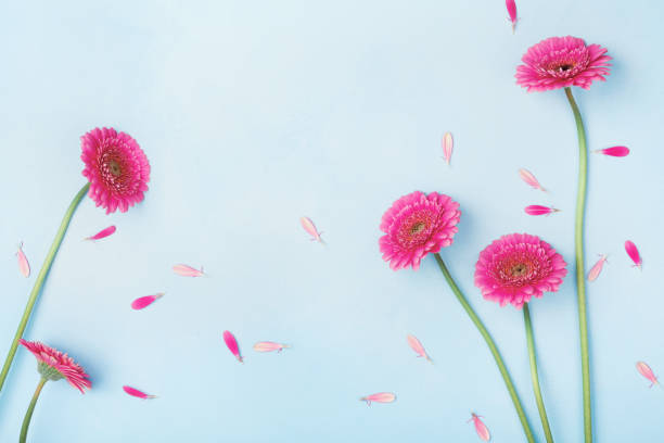 beautiful spring background with pink flowers and petals. floral frame. flat lay style. - welcome march stock photos and pictures
