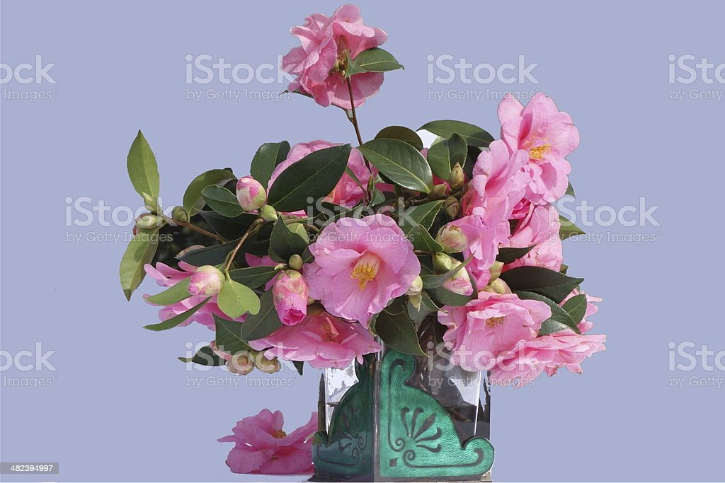 beautiful spring camelia flower table display on grey background stock photo