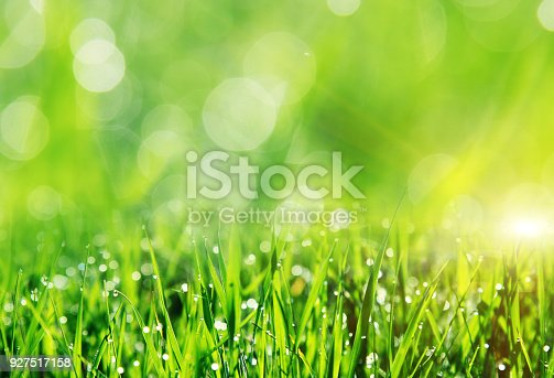 istock Beautiful spring field with a green grass 927517158
