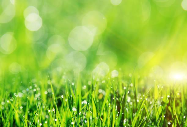 Campo hermoso de la primavera con una verde hierba - foto de stock
