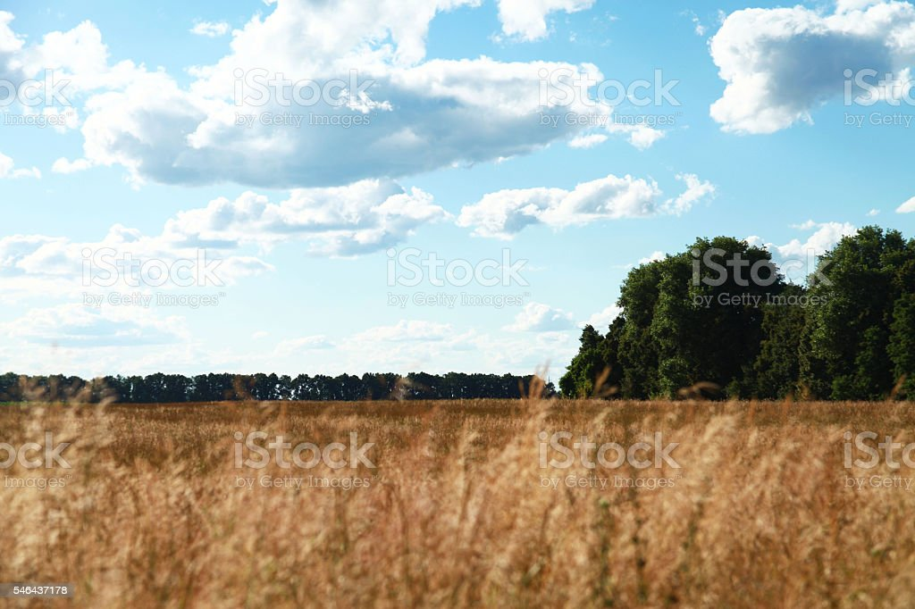 Beautiful spring field with the blue sky stock photo