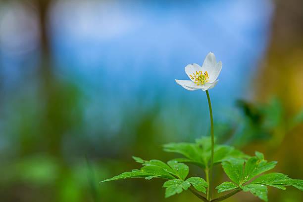 Beautiful spring flower stock photo