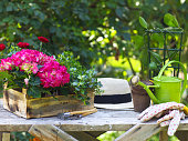 Beautiful spring flowers and garden tools