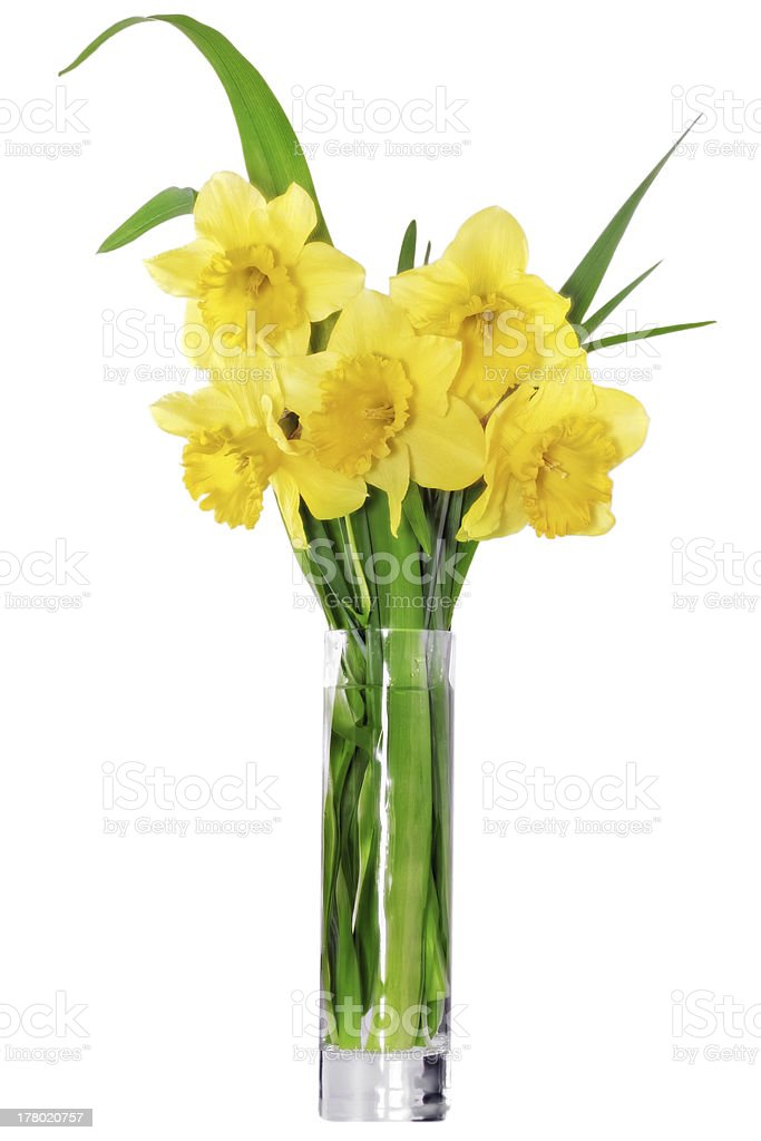 Beautiful spring flowers in vase: yellow  narcissus (Daffodil) royalty-free stock photo