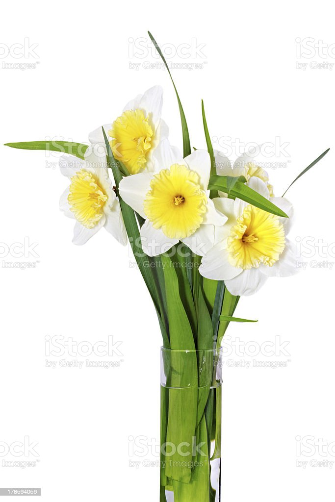 Beautiful spring flowers in vase: yellow-white narcissus (Daffod royalty-free stock photo