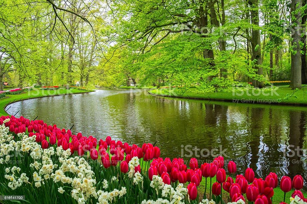 Beautiful spring flowers near pond in Keukenhof park in Netherlands stock photo
