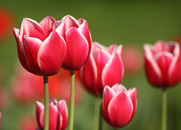 Schönen Frühling Blumen – Foto
