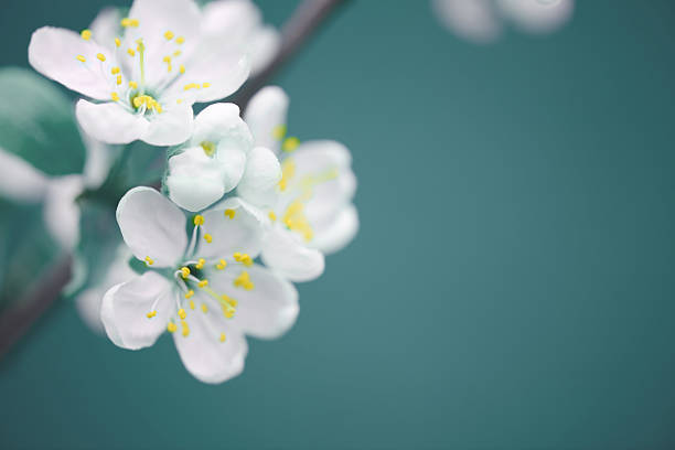 beautiful spring flowers - flowers stock photos and pictures