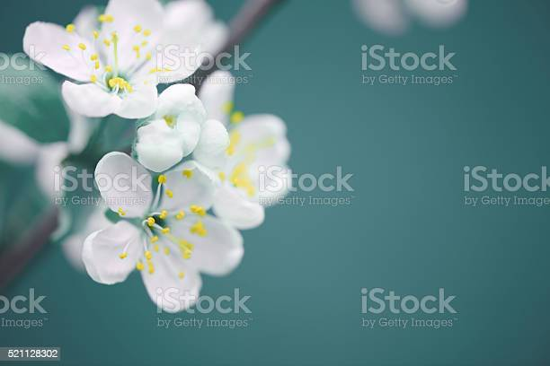 Free natural flower images pictures and royalty free stock photos beautiful spring flowers mightylinksfo
