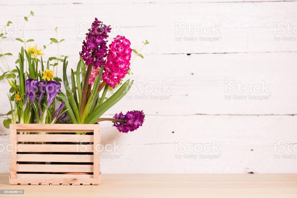 아름다운 연두빛 꽃 - 로열티 프리 0명 스톡 사진