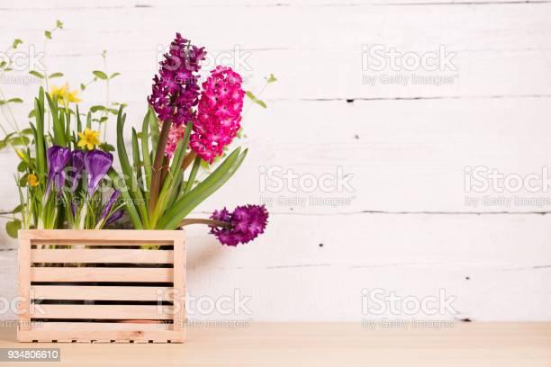 아름다운 연두빛 꽃 0명에 대한 스톡 사진 및 기타 이미지