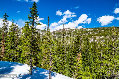 This is a collection of photos that I took on the way to Ouzel Falls in Rocky Mountain National Park in Allenspark, Colorado
