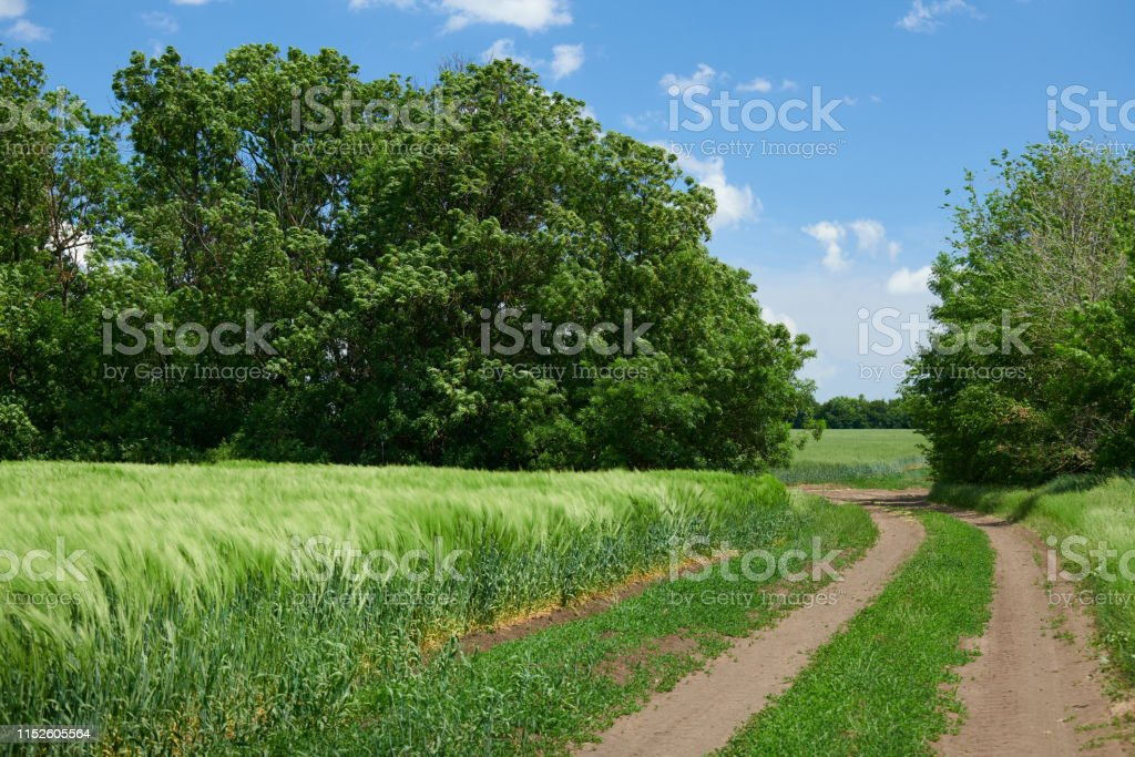 Beautiful spring landscape - Ground road in the wheaten field and...