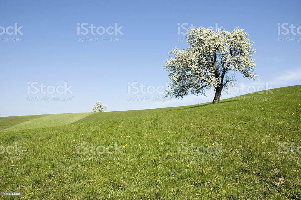 beautiful spring landscape royalty-free stock photo