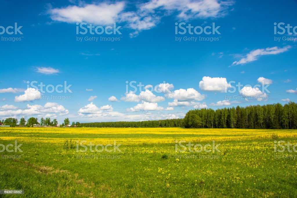 Beautiful spring landscape with yellow fields of dandelions. стоковое фото