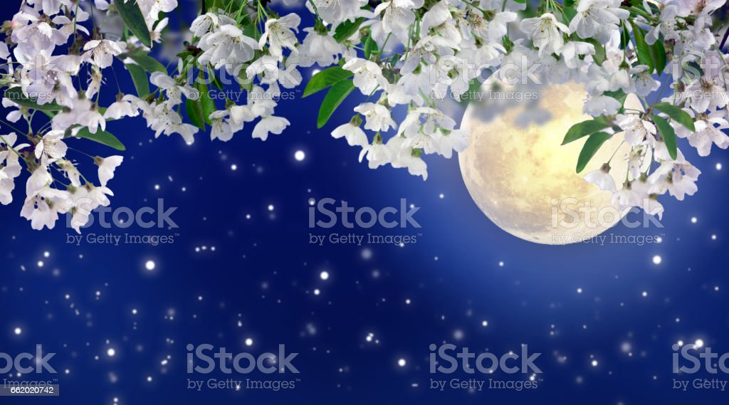 Beautiful spring night in the cherry orchard. royalty-free stock photo
