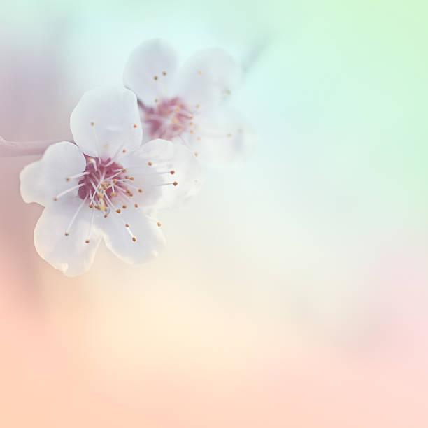Beautiful spring stock photo