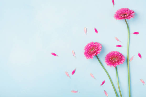 beautiful spring pink flowers on blue pastel table top view. floral border. flat lay. - welcome march stock photos and pictures