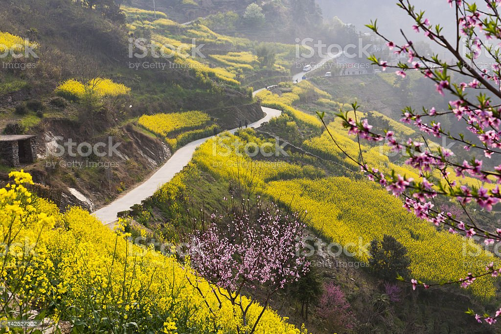 beautiful spring road stock photo