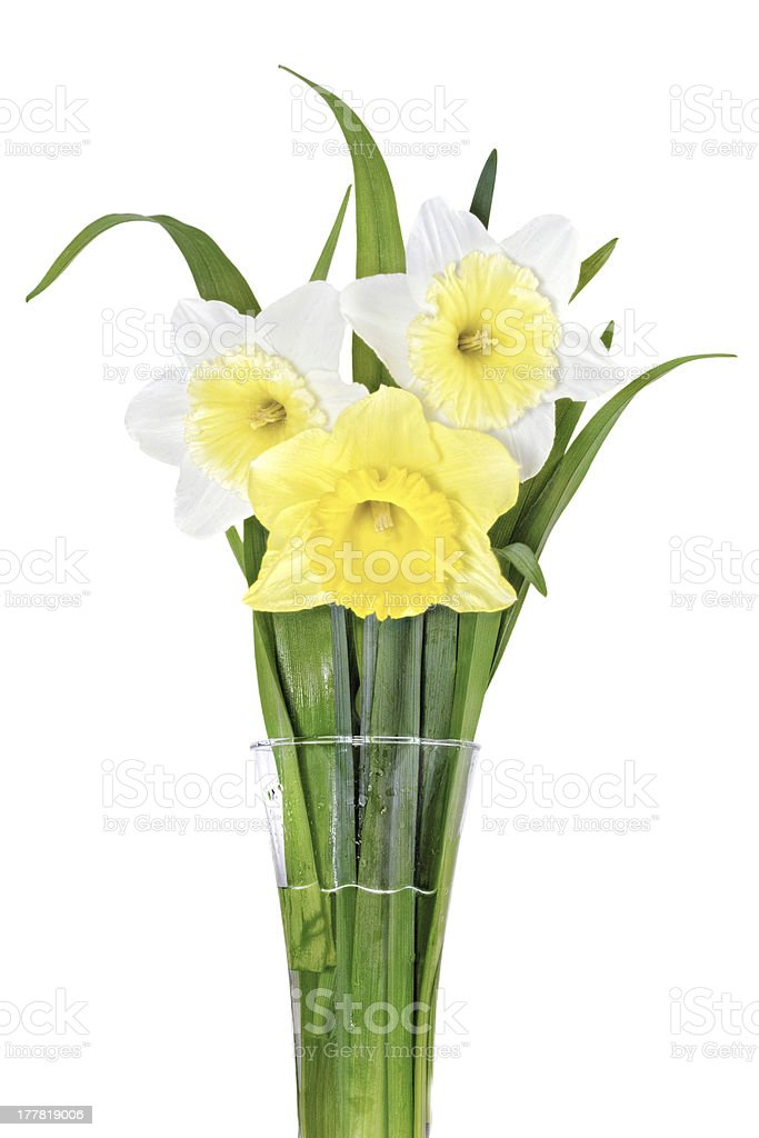 Beautiful spring  three flowers : yellow-white-orange narcissus royalty-free stock photo