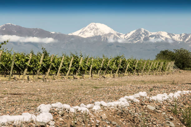 Beautiful springtime at vineyards stock photo