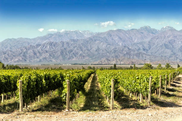 Beautiful springtime at vineyards Beautiful springtime in vineyards at foot of the Andes. Tupungato, Mendoza, Argentina. Argentina stock pictures, royalty-free photos & images