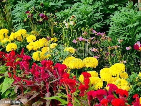 Thailand Garden, Brick, Plant, Springtime, asia
