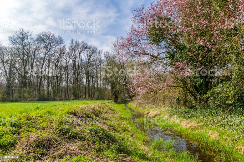 Beautiful Springtime Mood at small Creek/ Germany stock photo